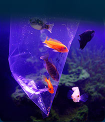 Acclimating Fish : ... Fish acclimation process guideline to successfully introduce new fish